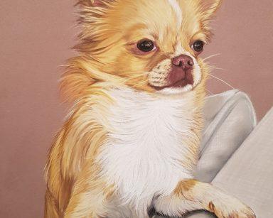 """Chihuahua """"Binky 2"""""""