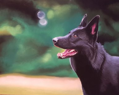 BlackShepherd