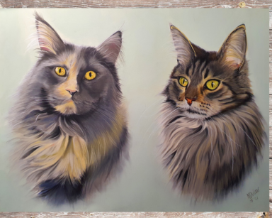 Maine Coon duo
